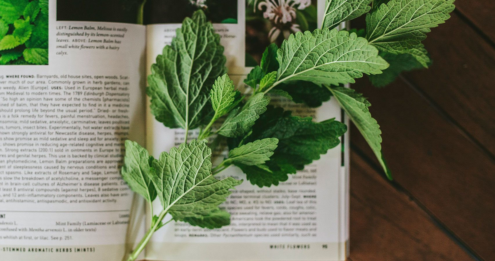 An Herbalist Library Identifying Wild Medicinals Traditional